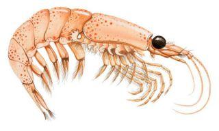 Informazioni importanti sull'olio di Krill